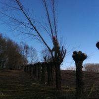 Knotten van bomen